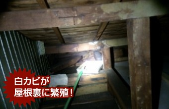 ラバーロック工法が原因で雨漏りが発生し、白カビが発生した屋根裏